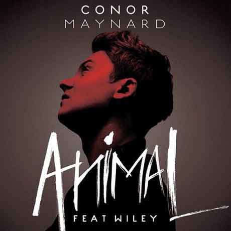 cover single Animal