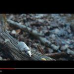 alt-J: guarda l'inquietante video del nuovo brano In Cold Blood + traduzione del testo