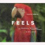 Calvin Harris, Pharrell Williams, Katy Perry & Big Sean nel nuovo singolo Feels: audio, testo e traduzione + video
