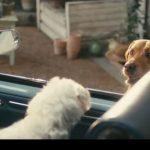 Pubblicità Vivident Xylit: titolo canzone spot con i cani