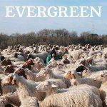 Copertina album EvergreenE Altre Canzoni