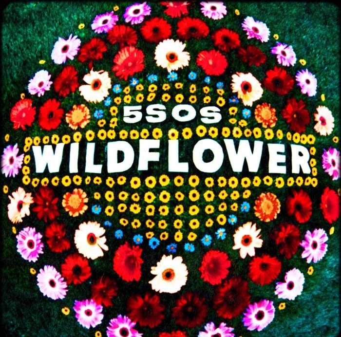 copertina canzone Wildflower