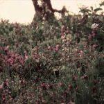 anteprima lyric video the lake