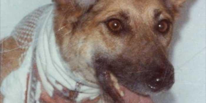 ascolta su soundcloud alla fine del sogno de i cani